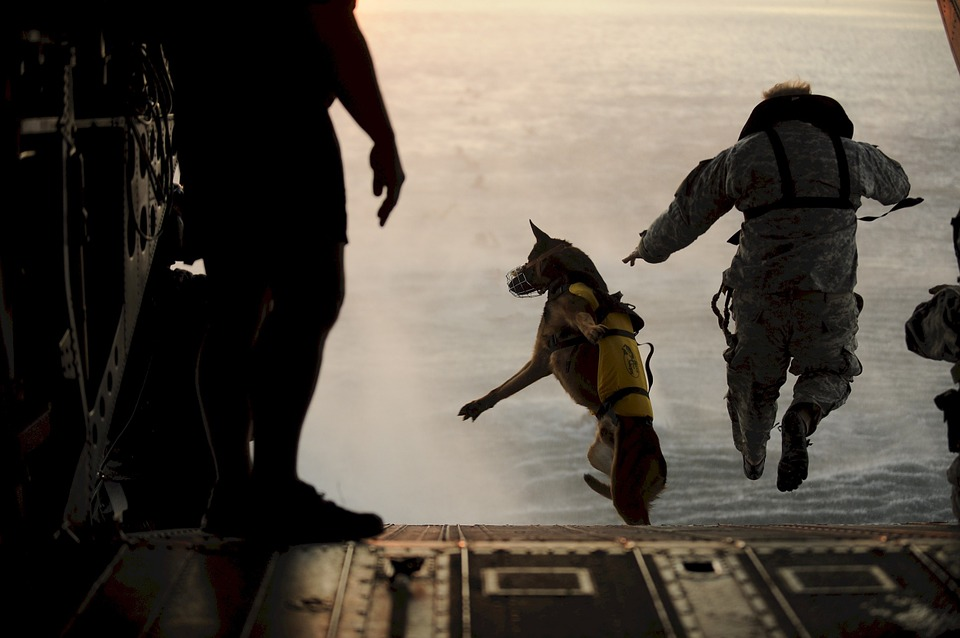 dog and man jumping from plane