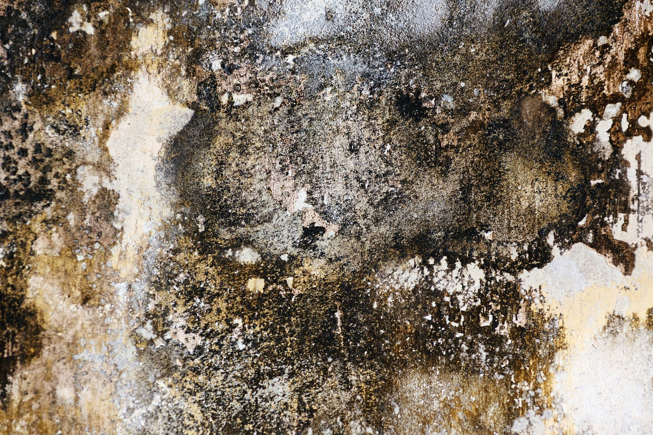 10 Reasons Why Your Property May Require Damp Proofing